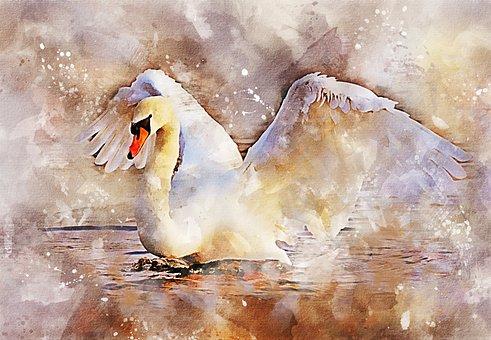 Swan, Wings, Bird, Grace, Fantasy, Water, Spray