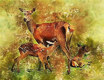 Fawn, Deer, Twins, Living Nature, Animals, Cute, Nature