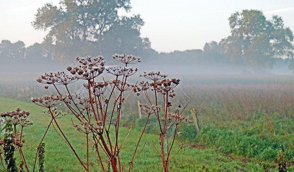 Autumn Mood, Fog, Fields, Pasture, Wild Plants