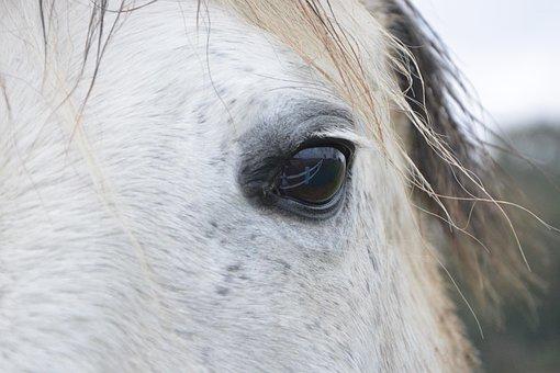 Horse, Horse Eye, Next To Horse, Horse Color White
