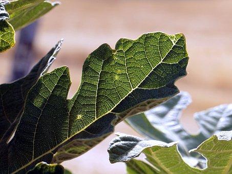 Leaves, Green, Nature, Bright Leaf, Green Leaf, Fiber