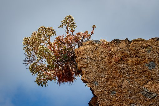 Canary Islands, Plant, Nature, Green, Volcano