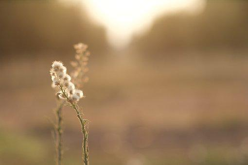 Early, Morning, Farm, Sunlight, Nature, Outdoor, Plant