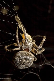 Spider, Araneus, Prey, Night, Macro, Gloomy, Weird