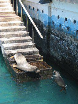 Galapagos, Water, Seals, Harbour