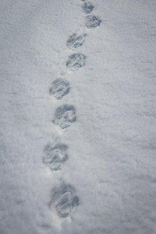 Traces, Snow, Winter, Snow Lane, Snow Tramp, Reprint