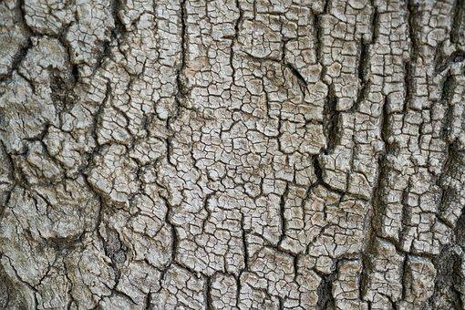 Tree, Texture, Body, Macro, Background, Shell, Nobody