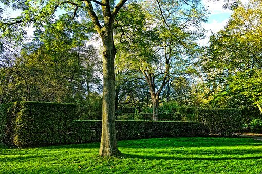 Park, Tree, Hedge, Clipped, Grass, Landscape, Sunlight
