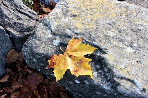 Maple Leaf, Yellow, Autumn Leaf, Autumn, Stone, Beach