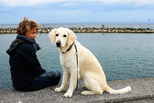 White Dog, Golden Retriever, Animal, Puppy, White