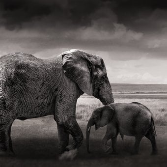 Elephant, Baby Elephant, Young, Animals, Africa
