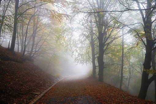 Fog, Forest, Nature, Trees, Winter, Autumn, Rising Fog