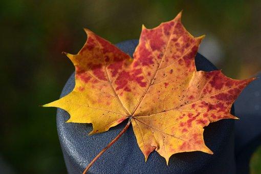 Leaf, Maple Leaf, Autumn, Colorful, Autumn Colours