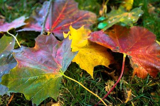 Leaves, Autumn, Emerge, Golden Autumn, Fall Foliage
