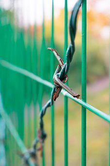 Barbed Wire, Fences, Fence, Tangled, Native, Captivity