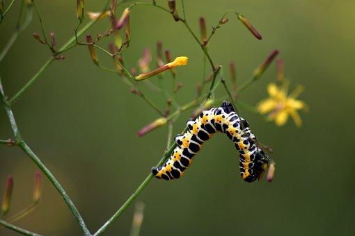Nature, Caterpillar, Macro, Meadow, Flower, Closeup