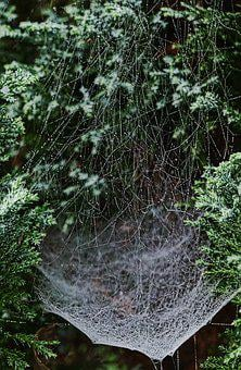 Cobwebs, Dewdrop, Drip, Beaded, Cobweb, Morgentau, Dew