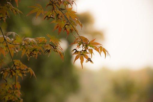 In Autumn, Autumn, West Coast, Fall