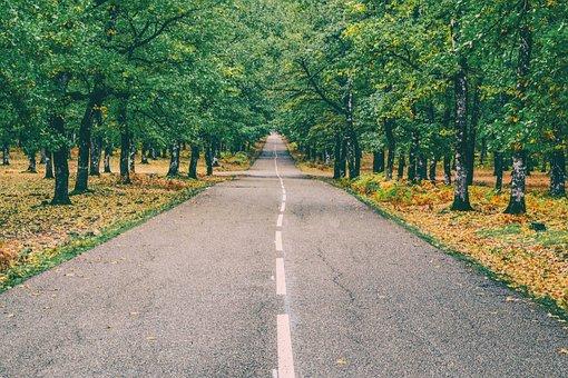Road, Forest, Autumn, Landscape, Greece, Foloi