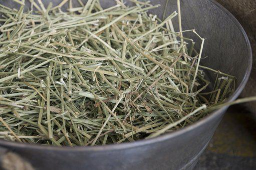 Dry Grass, Grass Family, Hay, Horse, Horse Hoof