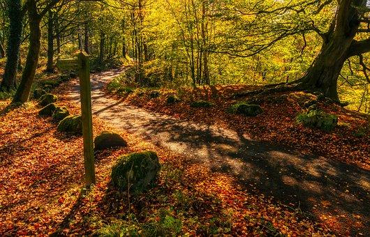 Autumn Light, Leaves, Landscape, Barden Fell, Tranquil