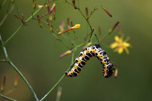 Caterpillar, Nature, Macro, Meadow, Flower, Closeup