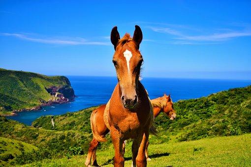 Oki Islands, Japan, Horses, Hills, Bay, Summer