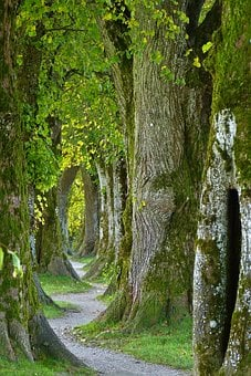 Trees, Old, Avenue, Nature, Log, Forest, Away, Swinging