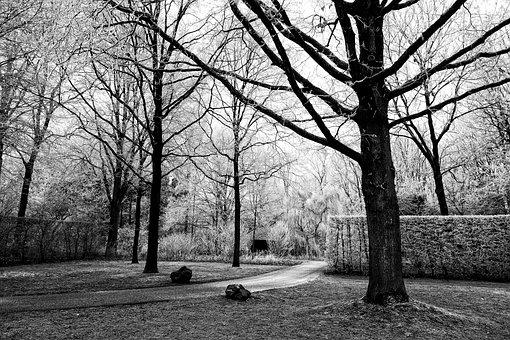 Tree, Hedge, Path, Park, Frost, Winter, Winter Scene