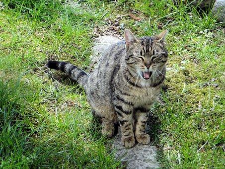 Cat, Mammal, Slow Living, Nature, Predator, Cat's Eyes