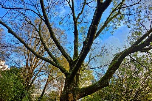 Tree, Branch, Tree Top, Silhouette, Autumn, Sky