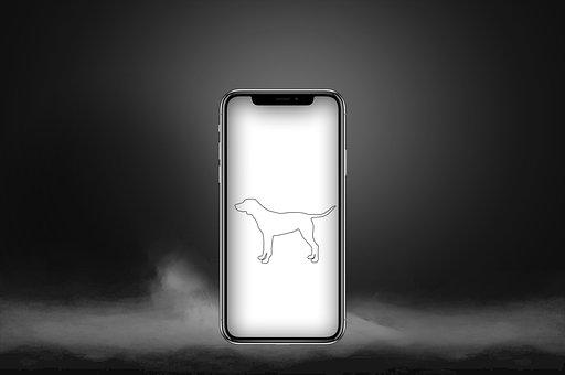 Phone, Dog, Animal, Technology, Iphone