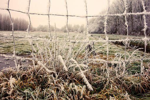 Wire, Mesh, Hoarfrost, Crystals, Landscape, Rural