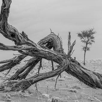 Wood, Desert, Sand, Dry, Nature, Drought, Arid