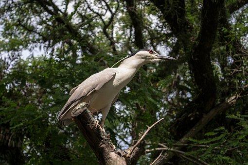 Ave, Pássaro, Bird, Nature, Animal, Cute, White