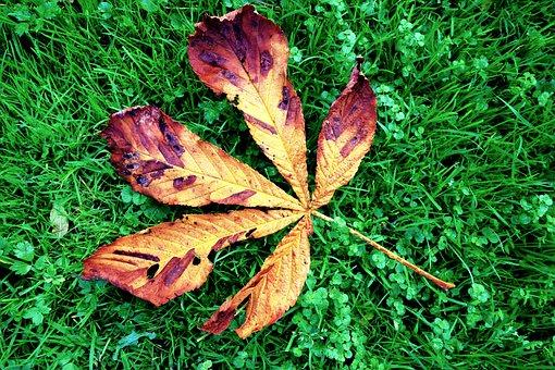 Chestnut, Leaf, Chestnut Leaf, Grass, Autumn