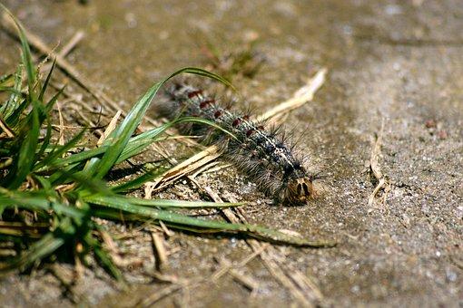 Caterpillar, Nature, Macro, Beauty, Closeup, Insect