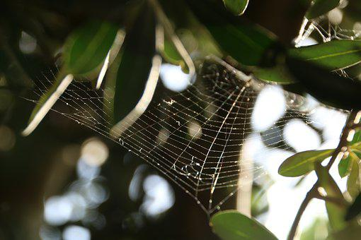 Cobweb, Green, Tree, Nature, Web, Macro, Natural