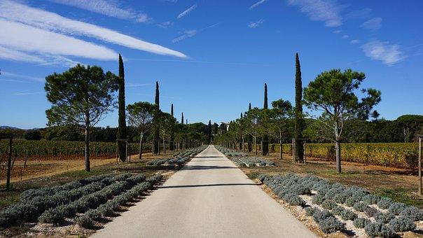Avenue, Pine, Cypress, Landscape, Sky, Fields