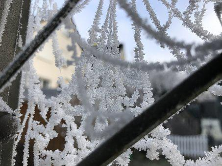 Frost, Cobweb, Network, Hoarfrost, Winter, Cold, Ice