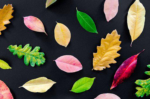 Autumn, Orange, Nature, Red, Yellow, Fall, Maple, Color