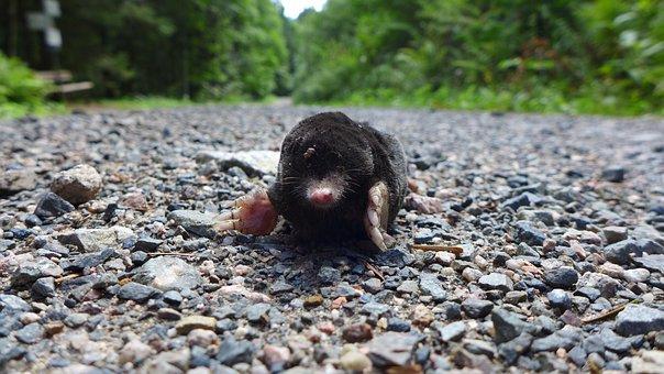 Run, Animal, Blind, Mole