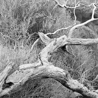 Wood, Shriveled From, Dry, Drought, Desert, Cracks