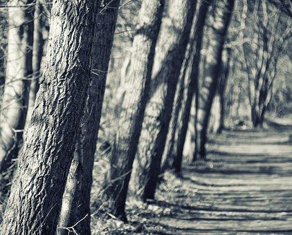 Away, Silent Way, Tree, Log, Close Up, Nature
