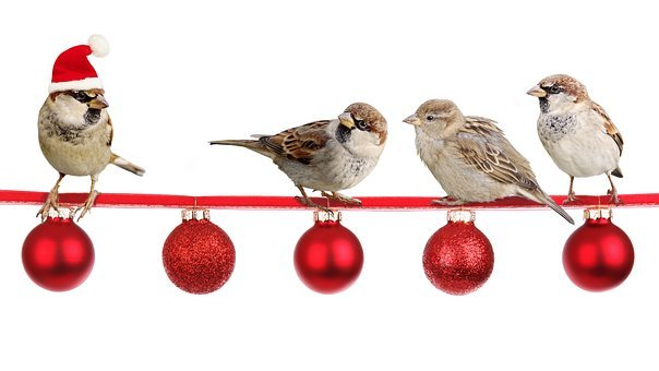 Sparrows, Christmas, Christmas Time, Deco, Advent