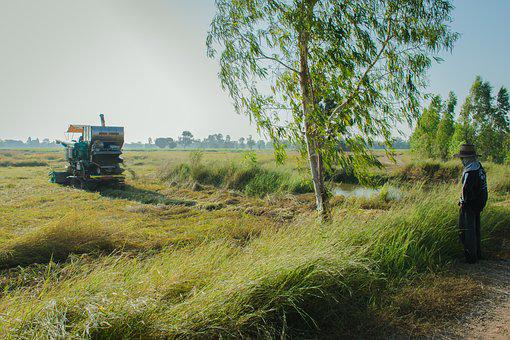 Agriculture, The Industry, The Village, Straw, Harvest