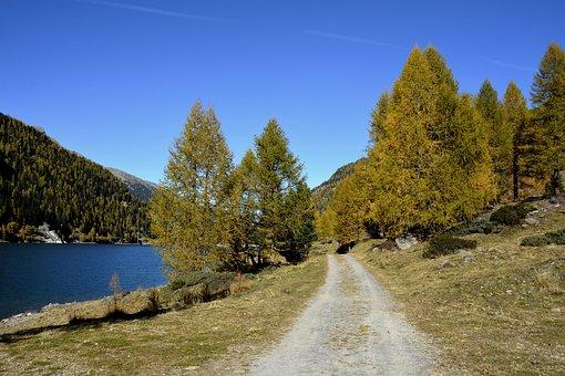 Landscape, Trees, Zufritt Reservoir, South Tyrol