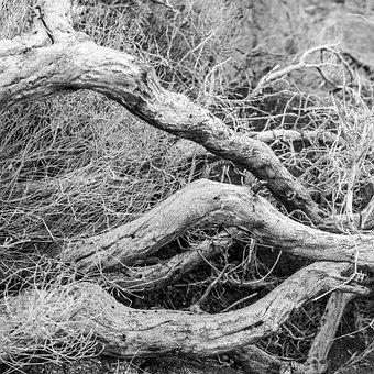 Wood, Shriveled From, Desert, Dry, Parched, Nature