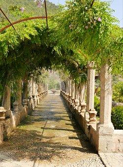 Spain, Mallorca, Sóller, Botanical, Garden, Alfabia