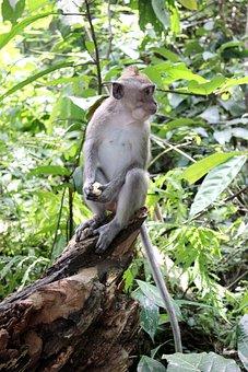 Nature, Bali, Monkey